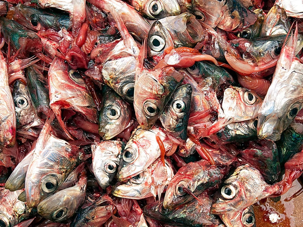 FISH AND OTHER FOOD WASTE USED AS BIOGAS FOR FLOORING PRODUCTION